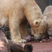 Content from Zoo Rostock 03.05.2015 1. Teil
