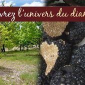 Gîte et chambre d'hôte de charme, lot - Hameau du Quercy, gîtes et chambres d'hotes de charme avec piscine naturelle, Lot