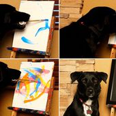 A real PAW-casso: Talented Arbor the dog creates amazing paintings which sell for hundreds of pounds