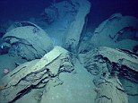 Mysterious giant flower found on bottom of ocean   Mail Online