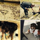 Police rescue dog stuck neck-deep in mud for three days