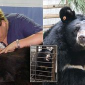Vet's mission to give sight to bears blinded in China's bile 'farms'