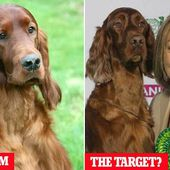 Crufts hit by MURDER claim after dog believed poisoned