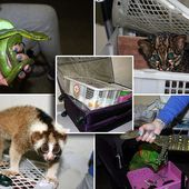 Russian customs catch woman trying to smuggle 108 exotic animals
