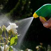 """Jardin: les pesticides """"chimiques"""" interdits dans 2 ans"""