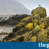 Threatened seabirds begin to recover on Macquarie Island after pests eliminated