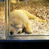 San Diego Bans Sale Of Dogs And Cats From Pet Stores