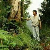 Ventana a mi Comunidad / Chinantecos, el bosque más antiguo