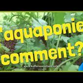 Un système d'aquaponie: comment ca marche?