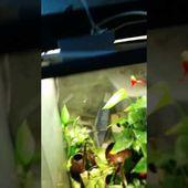 Arrosage de paludarium, terrarium, aquaterrarium, avec moteur de machine à café.
