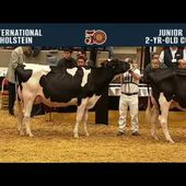 727 - Holstein Junior Two Year Old Cow