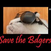Save the Badgers - Epic Video