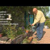 parlons technique jardin : le bouturage des rosiers anciens
