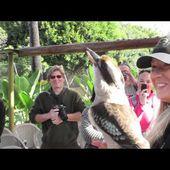 Crikey the kookaburra's Call