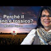 Perché il grano è tossico? - Marion Kaplan