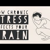 How stress affects your brain - Madhumita Murgia