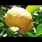 Peter Paul & May - Lemon Tree Lyrics