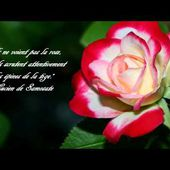 ❀⊱╮♥♫♥ GILBERT BECAUD .♥♫♥ l'important c'est la rose ♥♫♥ ❀⊱╮