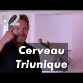 2 - cerveau triunique - neurosciences - coaching - psychologie