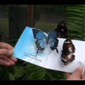 Real Butterflies Like This Butterfly Pop-Up-Card