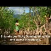 La Moringa Plante Miracle ou Arbre de Vie
