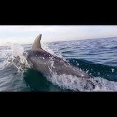 Les Dauphins filmés en drone-EASY RIDE opérateur drone en Bretagne