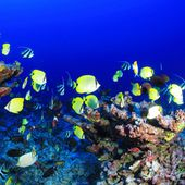 Dawn Chorus Of Reef Fish by Biological Diversity