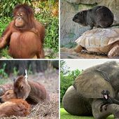 This advert of unlikely animal friends will make you cry happy tears