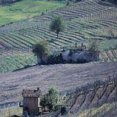 VINS D'ITALIE - Emmanuel Delmas, Sommelier & Consultant en vins, Paris