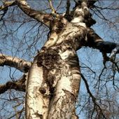 Funniest trees around the world