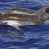 Marseille: Des dauphins à la Pointe Rouge