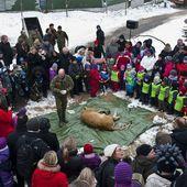 Un zoo danois invite les enfants à assister à la dissection d'un lion