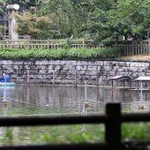 Japon: Des morceaux de corps retrouvés dans un parc de Tokyo