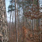 Humour Blonde: Perdue dans les bois