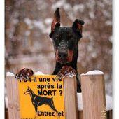 Insolite Panneau de chien méchant, dobermann: Mort ou vif