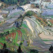 INTERNATIONAL - L'agro-écologie pour nourrir le monde - Le Blog du Vert Savoir