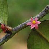A la découverte de la flore tropicale africaine   Afrique: développement durable et environnement