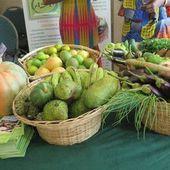 L'Afrique à la merci d'une insécurité alimentaire d'ici 2050 | Afrique: développement durable et environnement