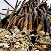 L'Afrique malade de ses ressources naturelles ? - JeuneAfrique.com