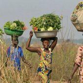 En Afrique, les femmes réinvestissent l'agriculture - JeuneAfrique.com | Afrique: développement durable et environnement