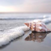 Seashell Home Decor