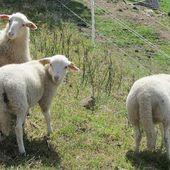 Sejour dans les Vosges jeudi 25 mai Le menil