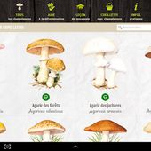ik-Champi - Applications Android sur Google Play