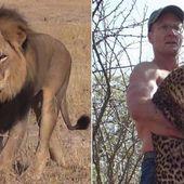 Zimbabwe : le bourreau du lion star Cecil identifié @lesoir