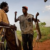 Laws Prohibiting Bush Meat Are Actually A Boon For The Bush Meat Biz