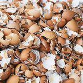 Fiche pratique : Utiliser des coquilles d'œufs au jardin