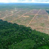 Pérou : 6 fermiers assassinés pour leurs terres au nom de l'huile de palme