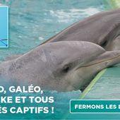 Petition - Pour Valentin, Moana et tous les autres : fermons les delphinariums !