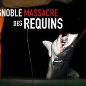 Petition - requins