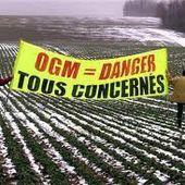 Intolérance au Gluten : le monde au seuil d'une nouvelle épidémie à cause du soja et des OGM -...